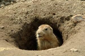 groundhog-day_02